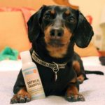 Best Dachshund shampoo