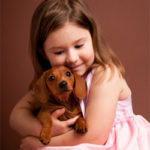 Dachshund puppies how to take care