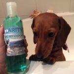 Dachshund shampoo