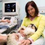 Detecting pregnancy in yorkshire terriers