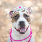 Female american pitbull terrier names
