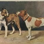 History of the american pitbull terrier