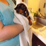 How often should i bathe my puppy Dachshund