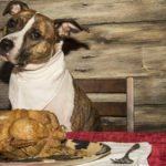 Pitbull terrier dog food
