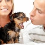 Training yorkshire terrier pups