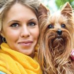 Yorkshire terrier characteristics