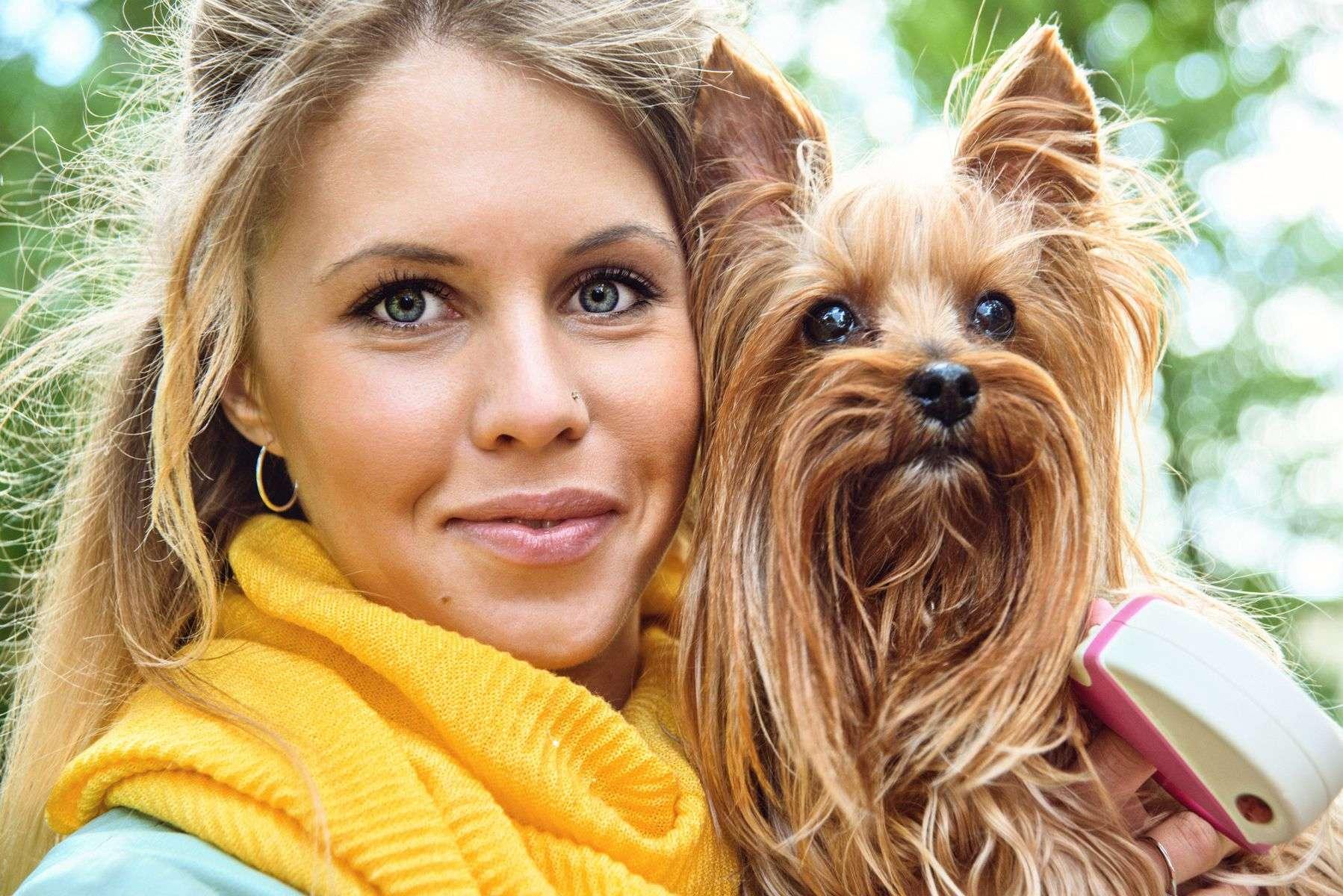 Yorkshire terrier characteristics