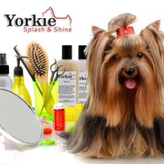 Yorkshire terrier grooming tools