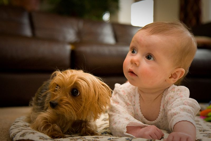 Yorkshire Terrier potty training tips