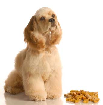 Best food for cocker spaniels with allergies