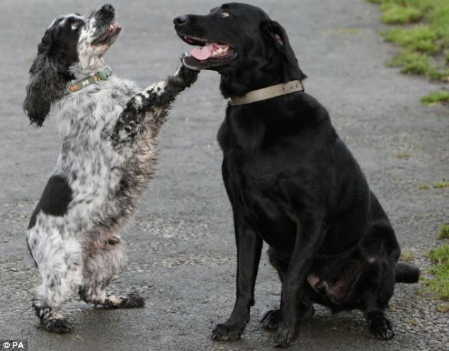 how to train a cocker spaniel not to bark