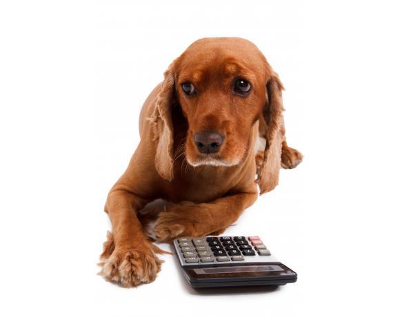 Cocker spaniel pregnancy calculator