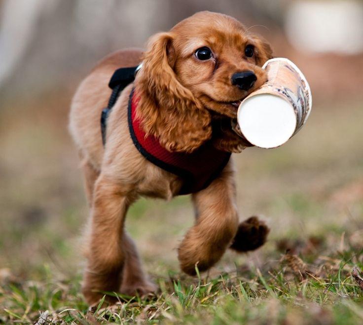 Cute boy dog names for cocker spaniels