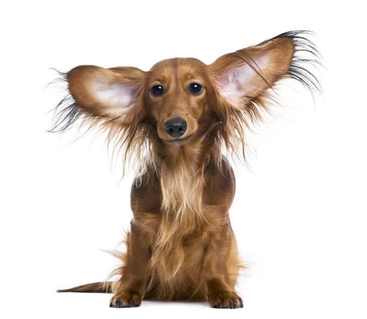 Cute Names For Dogs With Big Ears