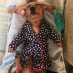 Cute names for dachshunds