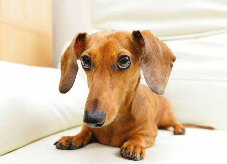 Names for a dachshund male