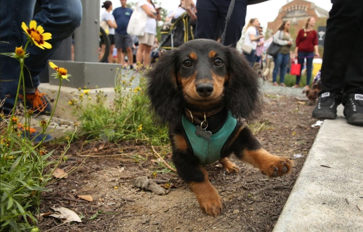 Popular names for dachshunds
