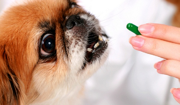 Sedatives for dogs