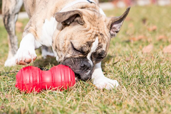 KONG - Dental - Durable Rubber, Teeth and Gum Cleaning Dog Toy - for Large Dogs